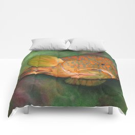 Coral Grouper Comforters