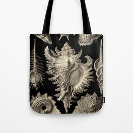 Ernst Haeckel Prosobranchia Sea Shells Tote Bag