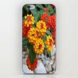 Macro Of Shrub Verbenas or Lantanas (Lantana Camara)  iPhone Skin