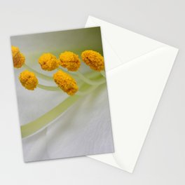 White Lys Close-up Stationery Cards