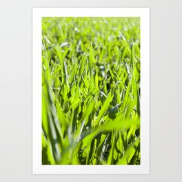 Field with cereal Art Print