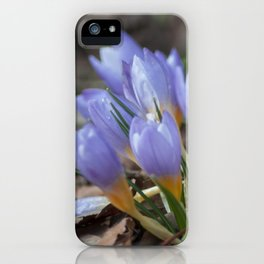 Crocus etruscus in silva iPhone Case