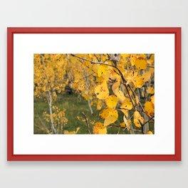 Aspen Leaves Framed Art Print
