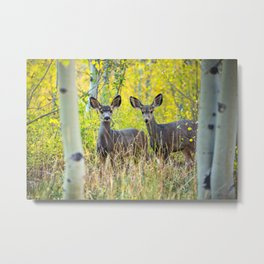 Double Take - Pair of Young Mule Deer Hiding in Autumn Aspens Metal Print