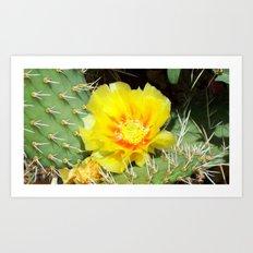 Prickly Yellow Beauty Art Print