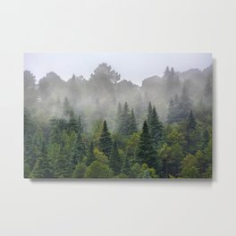 """""""Dream forest"""" Endemig trees into the fog Metal Print"""