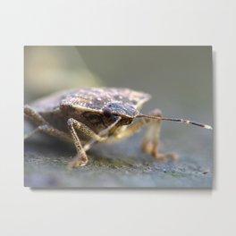 Shield Bug, Insect Macro Metal Print