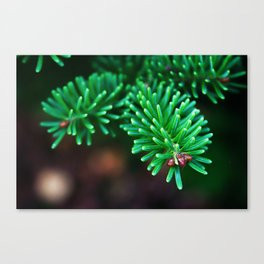 Wintergreen Canvas Print