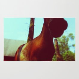 Horse at a Zoo Rug