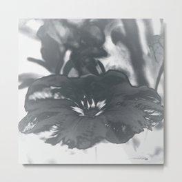 Bloom in Platinum Tone Metal Print