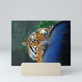 Playful Amur Tiger Mini Art Print