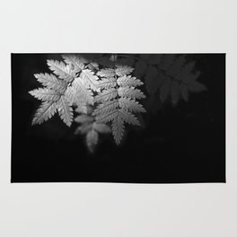 Ferns on Black Rug