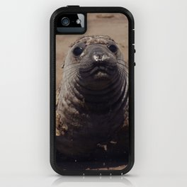 elephant seal pup iPhone Case