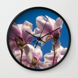 Magnolia tree blossoms Wall Clock