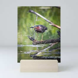 Green Heron in the channel Mini Art Print