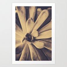 Succulent Leaves Art Print