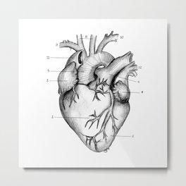Anatomical Heart Metal Print