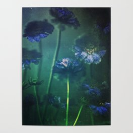 Scabious Blue Poster
