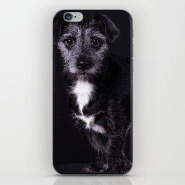 Pop the Dog iPhone Skin