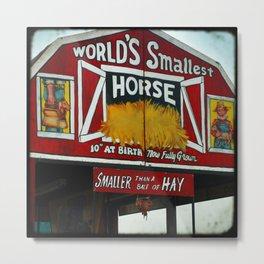 Worlds Smallest Horse Metal Print