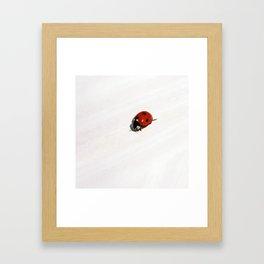 ladybug II Framed Art Print