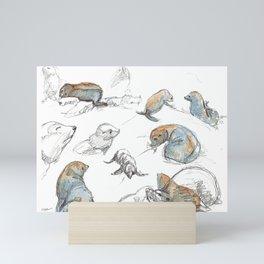 sketch of New zealand seals Mini Art Print