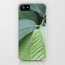 Botanic Touch Bold iPhone Case