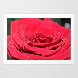 Rose Water Art Print
