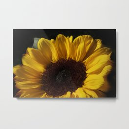 blossoms on black background -05- Metal Print