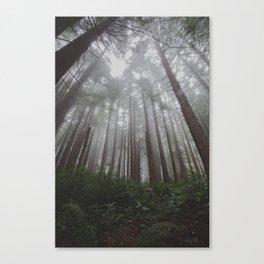 Redwood Fog Canvas Print