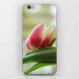 Tired Tulip II iPhone Skin