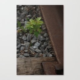 Little 'Green Leaf' On The Tracks Canvas Print