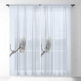 Lofty Vision (Snowy Owl) Sheer Curtain