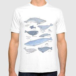 Whales Dolphins & Porpoises T-shirt