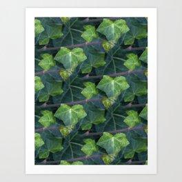 ivy pattern -01- Kunstdrucke