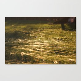 Walking in the Spiderwebs Canvas Print