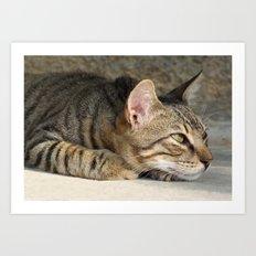 Thoughtful Tabby Cat Art Print