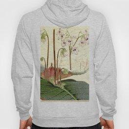 Streptocarpus saundersii 'Cape primrose' 1861 Hoody