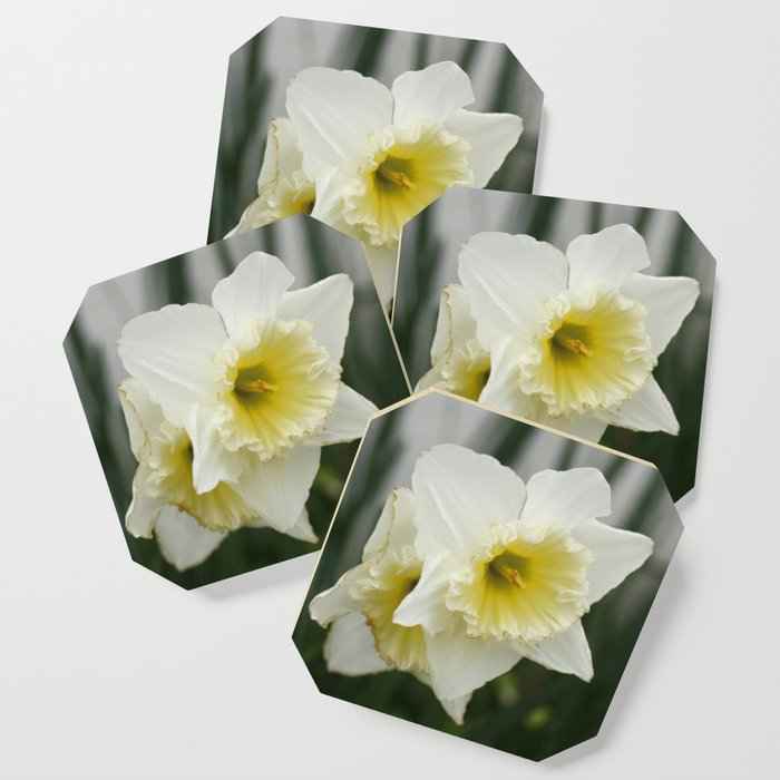 White And Yellow Daffodils Early Spring Flowers Coaster By Annaki