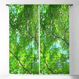 Canopy of Green, Leafy Branches with Blue Sky Blackout Curtain
