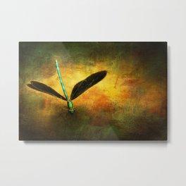 Ebony Jewel Wing Damselfly on Golden Sunlight Dragonfly Metal Print