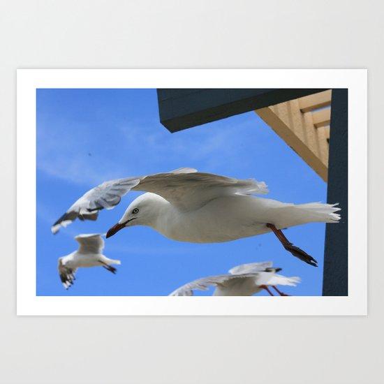 Gull company Art Print