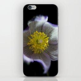 Night Crocus iPhone Skin