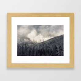 Steamy Forest -  Yellowstone National Park Framed Art Print