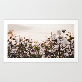 Cotton Field 6 Art Print
