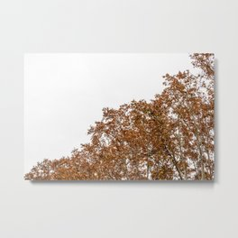 Red leaves I Metal Print