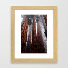 Woodley Forest Framed Art Print