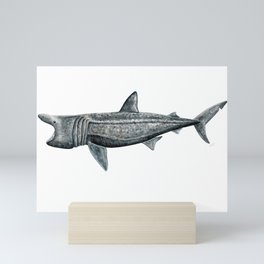 Basking shark (Cetorhinus maximus) Mini Art Print
