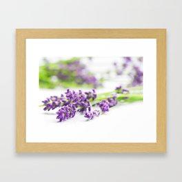 Lavender herb still life Framed Art Print