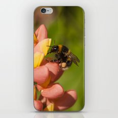 Bee on a Lupin iPhone & iPod Skin